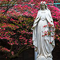 Mary with flowering shrub