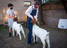 two students brace goats